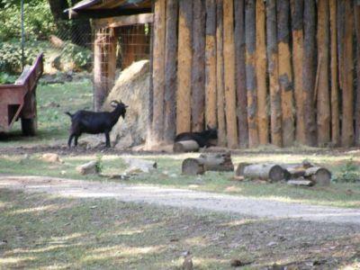 Zvieracia obora pri Čertovej peci