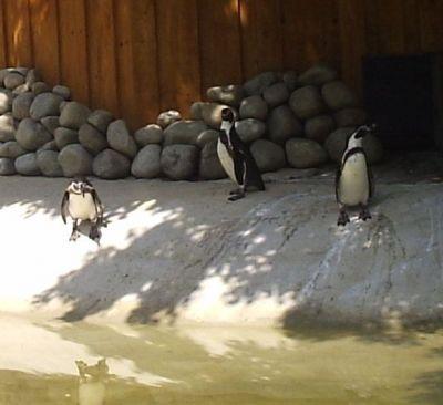 Košická Zoo